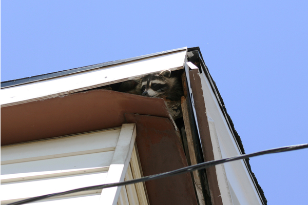 9 Common Animals That Can Cause Damage to Homes